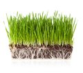 Grass with earth isolated roots in on white background Stock Image