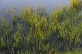 Grass at the edge of a pond Royalty Free Stock Photo