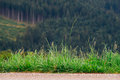 Grass on the edge of road Royalty Free Stock Photo