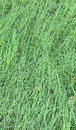 Grass Field Royalty Free Stock Photos