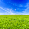 Grass field and blue sky Royalty Free Stock Photo