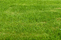 Grass Field Royalty Free Stock Photo