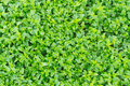 Grass on a field natural tropical Stock Image