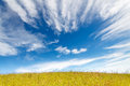 Grass field under blue cloudy sky Stock Image