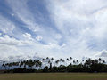 Grass field used for sports with coconut trees at parks edge during the day cool clouds baldwin district beach park Stock Images