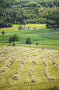 Grass fields with church cultivated isolated in the background Royalty Free Stock Photography