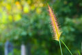 Grass flowe flower in beautiful natural Stock Photography