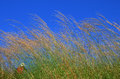 Grass flower with blue sky Royalty Free Stock Photo