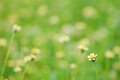 Grass flower garden Stock Photography
