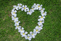 Grass flower heart white floral shape representing love green is like the complete lack of moisture Stock Images