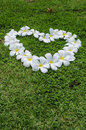 Grass flower heart white floral shape representing love green is like the complete lack of moisture Royalty Free Stock Photo