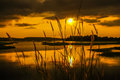 Grass flower beside swamp during sunset Royalty Free Stock Photo