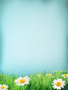 Grass and flowers on blue paper. Royalty Free Stock Photo