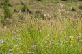 Grass flowers closeup pattern of spikes of and wildflowers illuminated by sunlight Royalty Free Stock Images