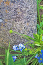 Grass and flowers over a rock stone Royalty Free Stock Photo