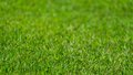 Grass in focus. Royalty Free Stock Photo