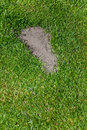 Grass and footprint Stock Photos