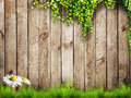 Grass fresh spring green with white flower camomile and leaf plant over wood fence background Stock Images