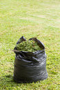 Grass in garbage bag green black color on lawn Royalty Free Stock Photo