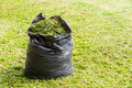 Grass in garbage bag green black color on lawn Stock Photos