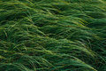 Grass in the garden ornamental Royalty Free Stock Photography