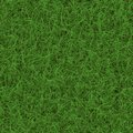 Grass generated seamless texture