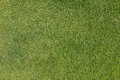 Grass on golf course putting  green Royalty Free Stock Photo