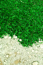 Grass green covered by yellow soil Royalty Free Stock Image