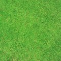 Grass green texture and background Stock Image