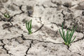 Grass grow up in dry soil Royalty Free Stock Photo
