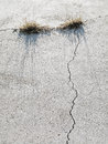 Grass Growing in Cracked Concrete. Royalty Free Stock Photo