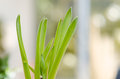 Grass growing garden Royalty Free Stock Photos