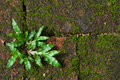 Grass growing on mosses wall background the the floor are many Royalty Free Stock Photo