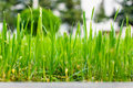Grass growing in the summer Royalty Free Stock Photos