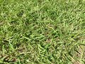 Grass grown details of a Royalty Free Stock Photos