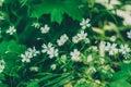 Grass is a herb