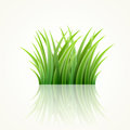 Grass highly detailed vector illustration Stock Photo