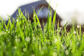 Grass at the house in dew Royalty Free Stock Image