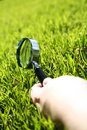 Grass Inspect Stock Photo