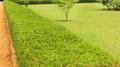 Grass land meadow Royalty Free Stock Photo