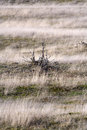 Grass in layers at the end of the winter the amsterdamse waterleidingduinen the netherlands Stock Photo