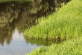 Grass on the marshy banks of river Royalty Free Stock Photography