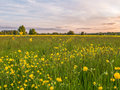 Grass meadow with buttercups at sunset image of a full of a tree lined horizon leading to a pink and blue sky Royalty Free Stock Photography