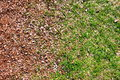 Grass and mulch transition in outdoor background Stock Photo