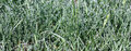 Grass panorama after a rain the young green is covered by water drops Royalty Free Stock Photos