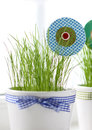 Grass and paper flower in a pot on windowsill Royalty Free Stock Photo