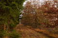 Grass path between the trees in the forest at fall Royalty Free Stock Photo