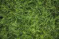 Grass pattern Royalty Free Stock Photo