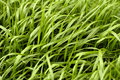 Grass pattern Royalty Free Stock Photos