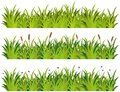 Grass pattern with flowers on white background